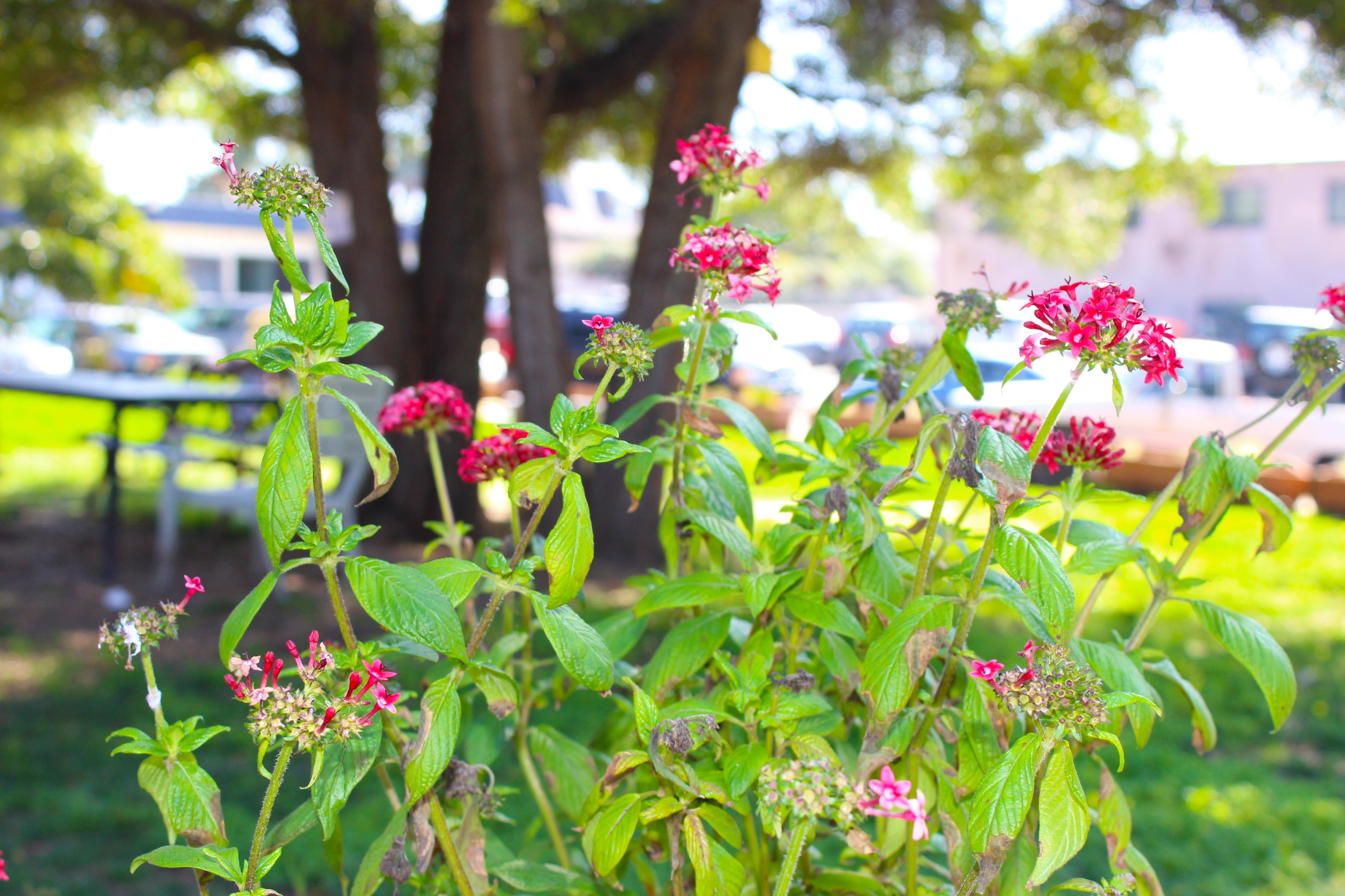 Backyard (Flower)